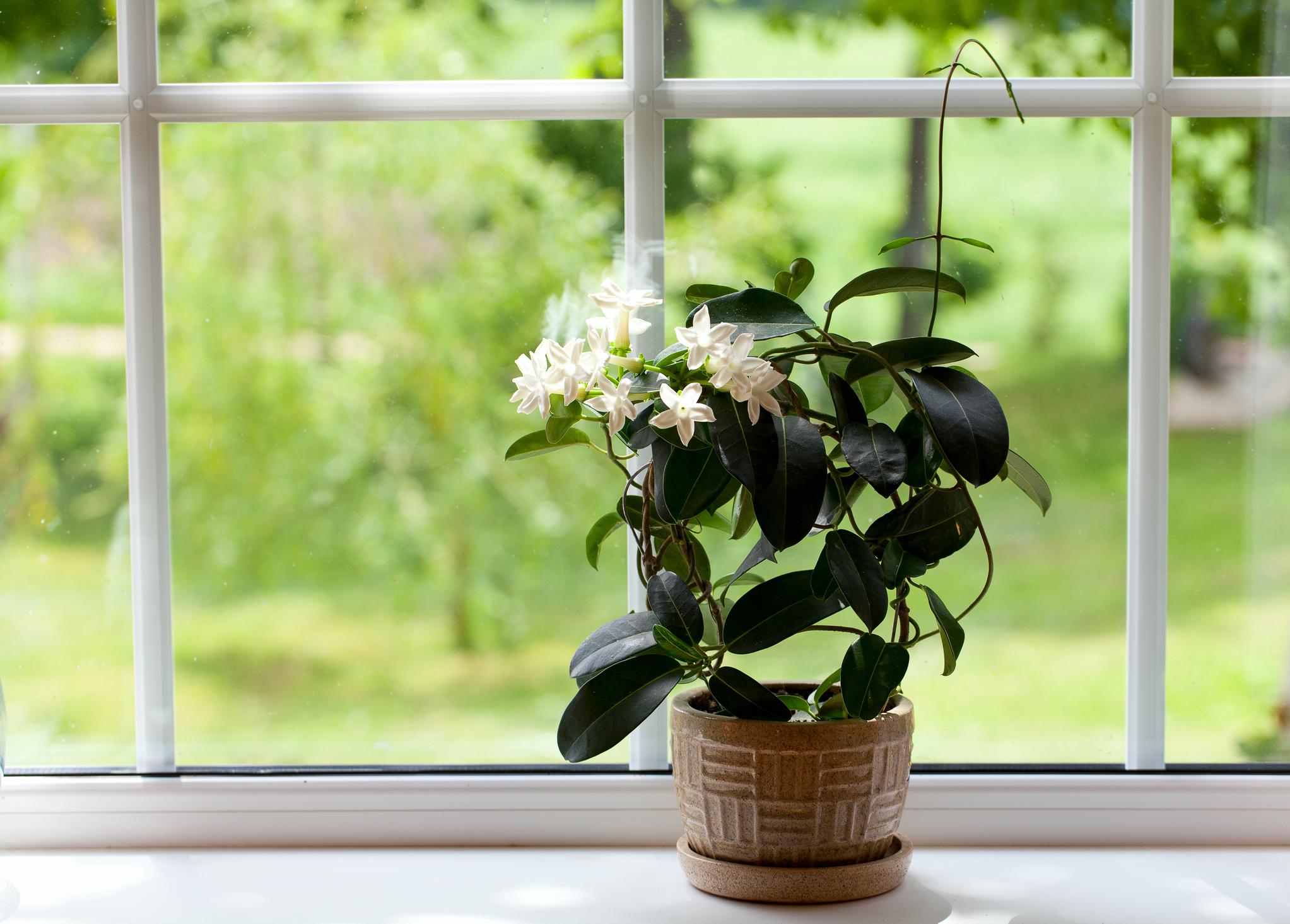 Mit diesen Pflanzen kannst Du besser schlafen | desired.de