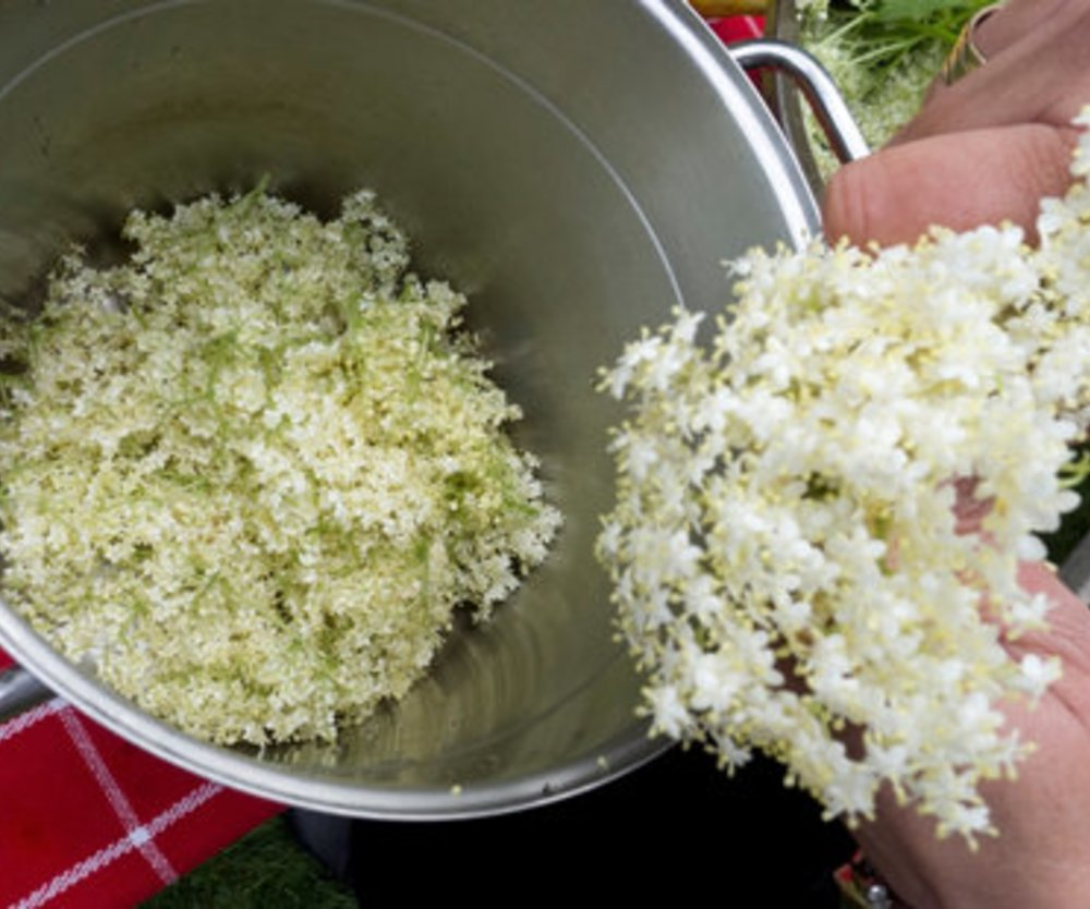 Holunderblütensirup kochen