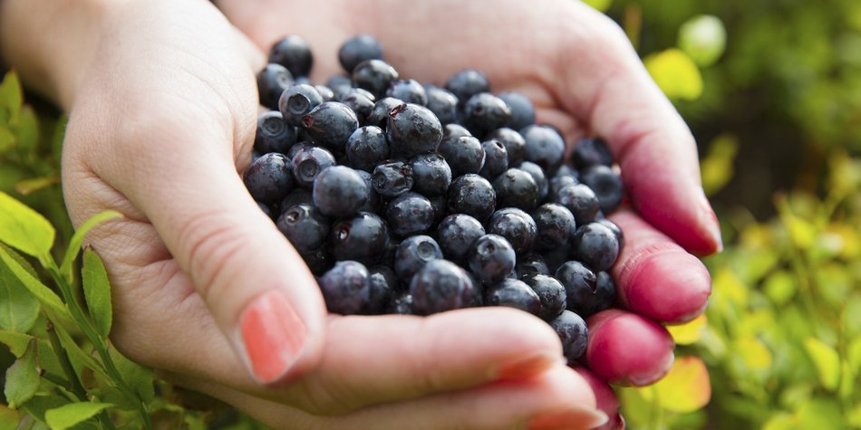 Power-Beere Acai: Das kann das Superfood