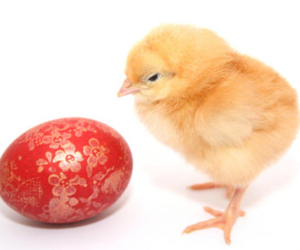 Auf ein Ei geschrieben