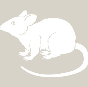rat_302x300