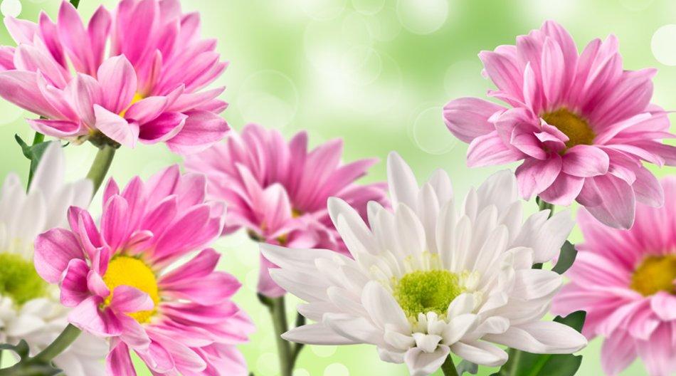Das Blumen-Abo bietet Wohlfühl-Atmosphäre für Ihr Zuhause.