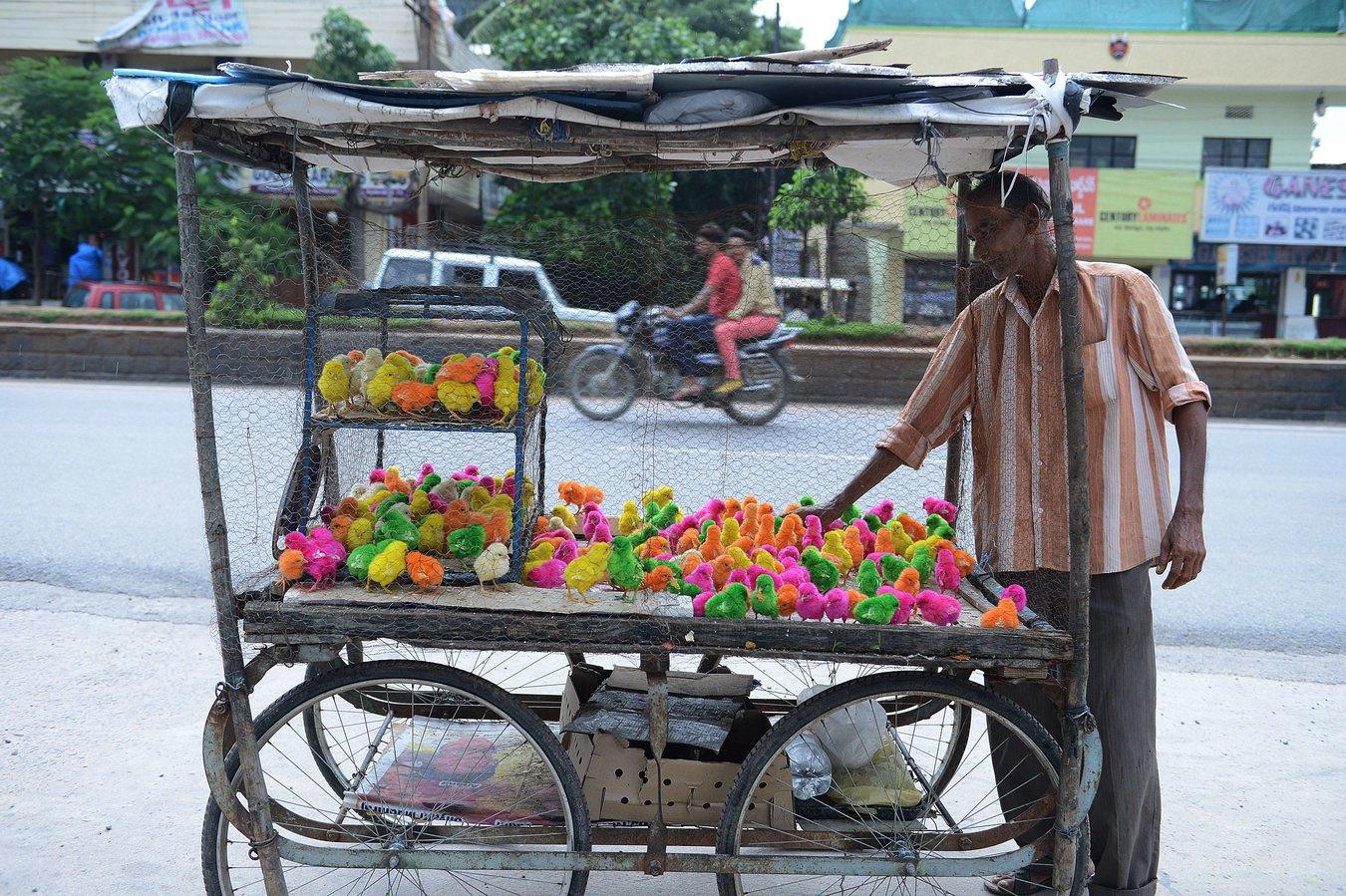 Kleine Küken werden auf der ganzen Welt in knalligen Neonfaben gefärbt und auf Märkten verkauft.