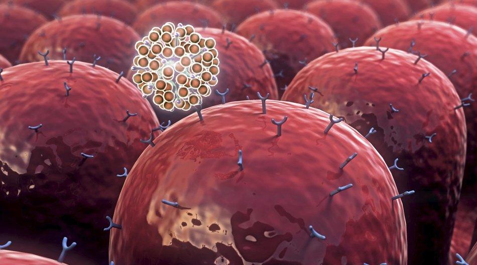 Stellschraube Metabolismus