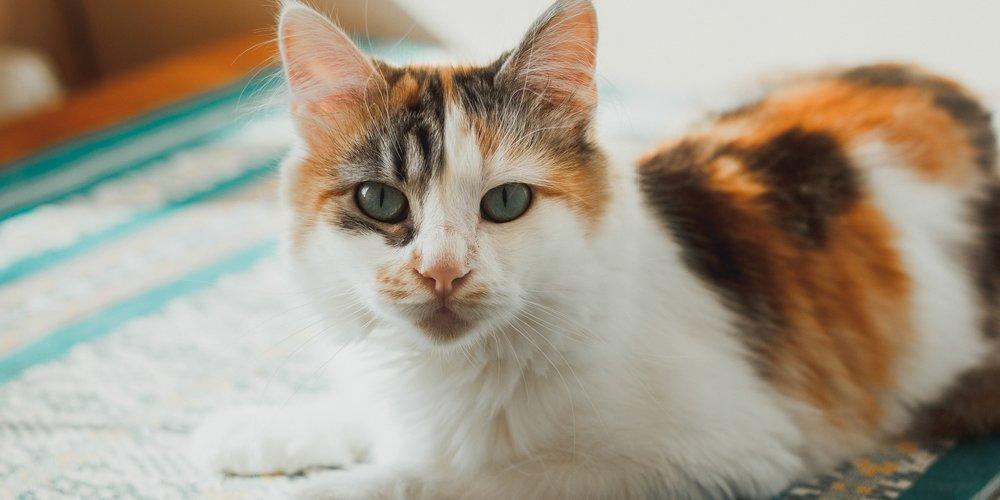 Aggressivere Katzen