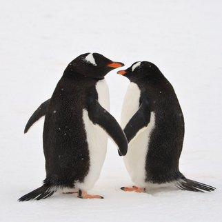 Penguins Hold Hands