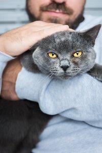 Katzenbesitzer gehen am häufigsten fremd
