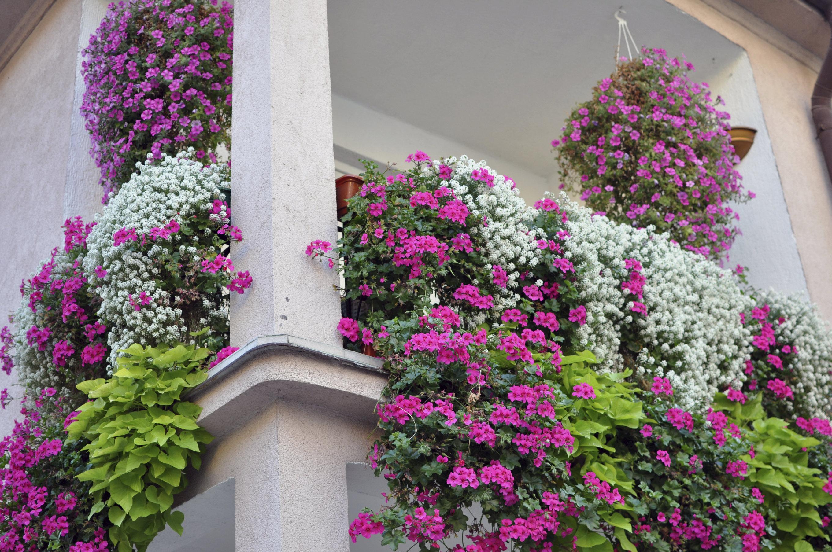 Balkonpflanzen Traum Vom Blutenmeer Desired De
