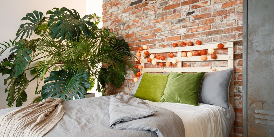 7 zimmerpflanzen die wenig licht brauchen. Black Bedroom Furniture Sets. Home Design Ideas