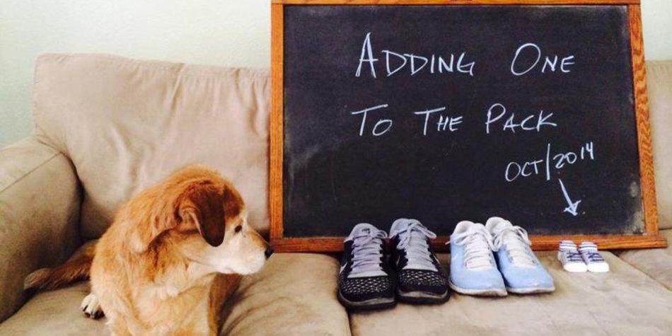 Süße Hunde kündigen den Familienzuwachs an