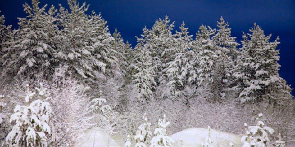 Gedichte Zu Advent Und Weihnachtszeit Desiredde