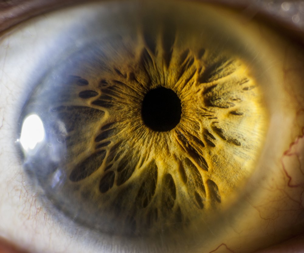 A closeup of a human eye.