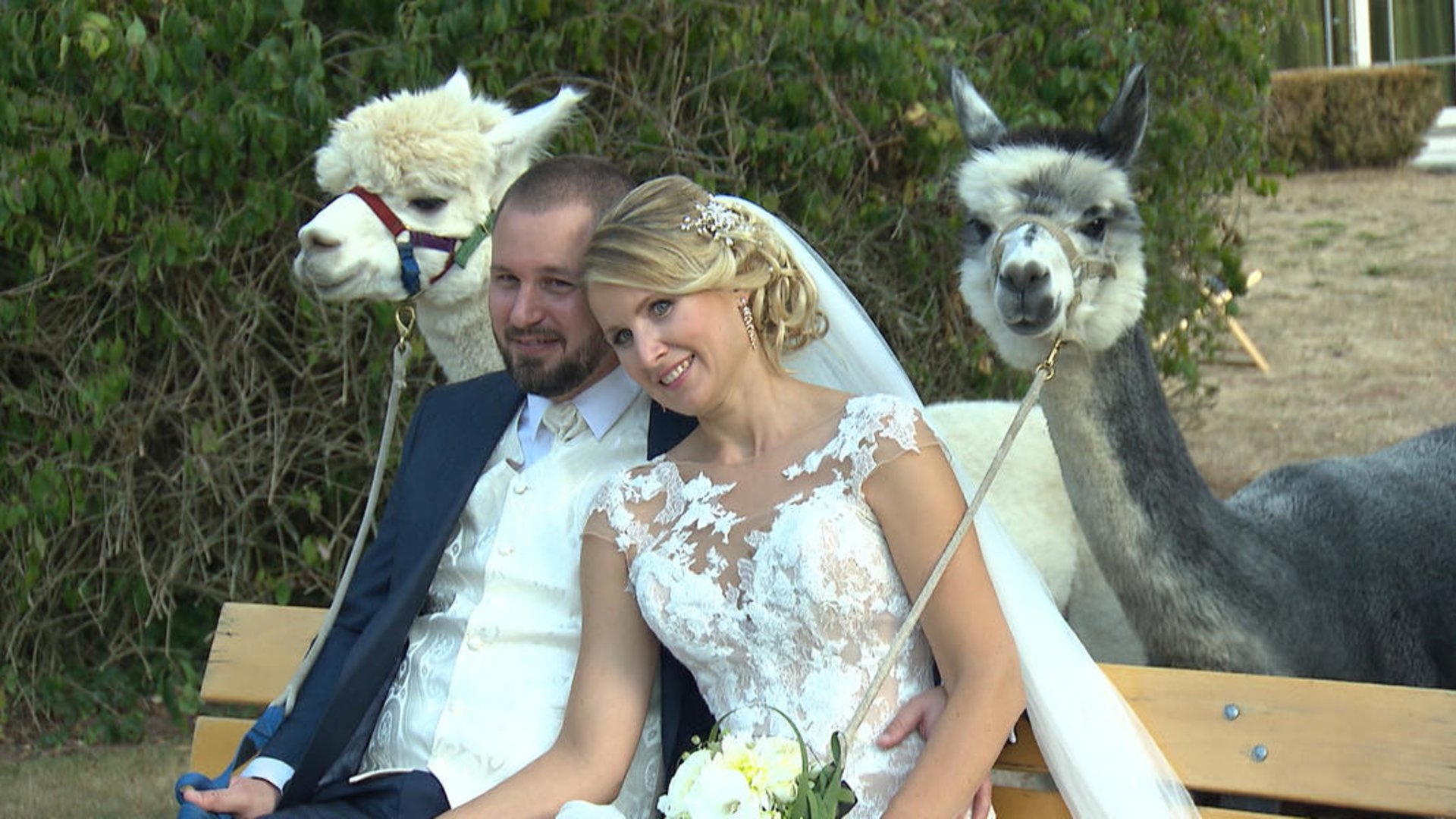 Hier Kannst Du Die Susseste Alpaka Hochzeit Ever Feiern Desired De
