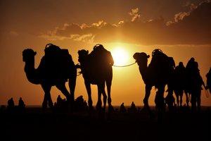 Warum nicht mal auf dem Rücken die Wüste erkunden?