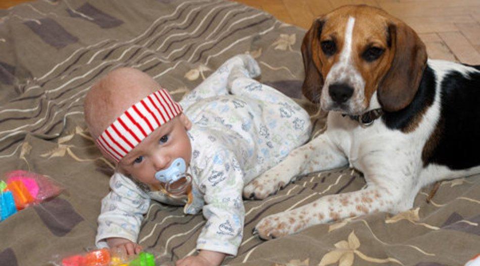 Haustiere haben heilende Wirkung