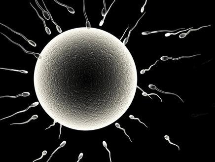 weibliche spermien fördern