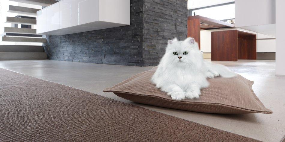 Katze Gourmet_2_(1)