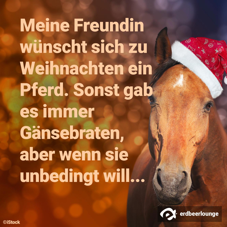 zu Weihnachten ein Pferd