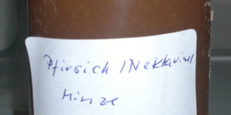 Pfirsich- ,Nektarinenmarmelade mit Minze