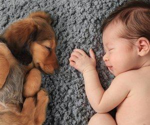 Kleiner Hund und Baby schlafen