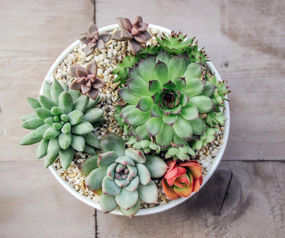 Sukkulenten erobern als Food Trend Instagram