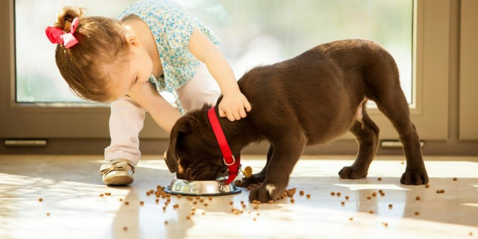 Haustiere und Babys: Was ist zu beachten?