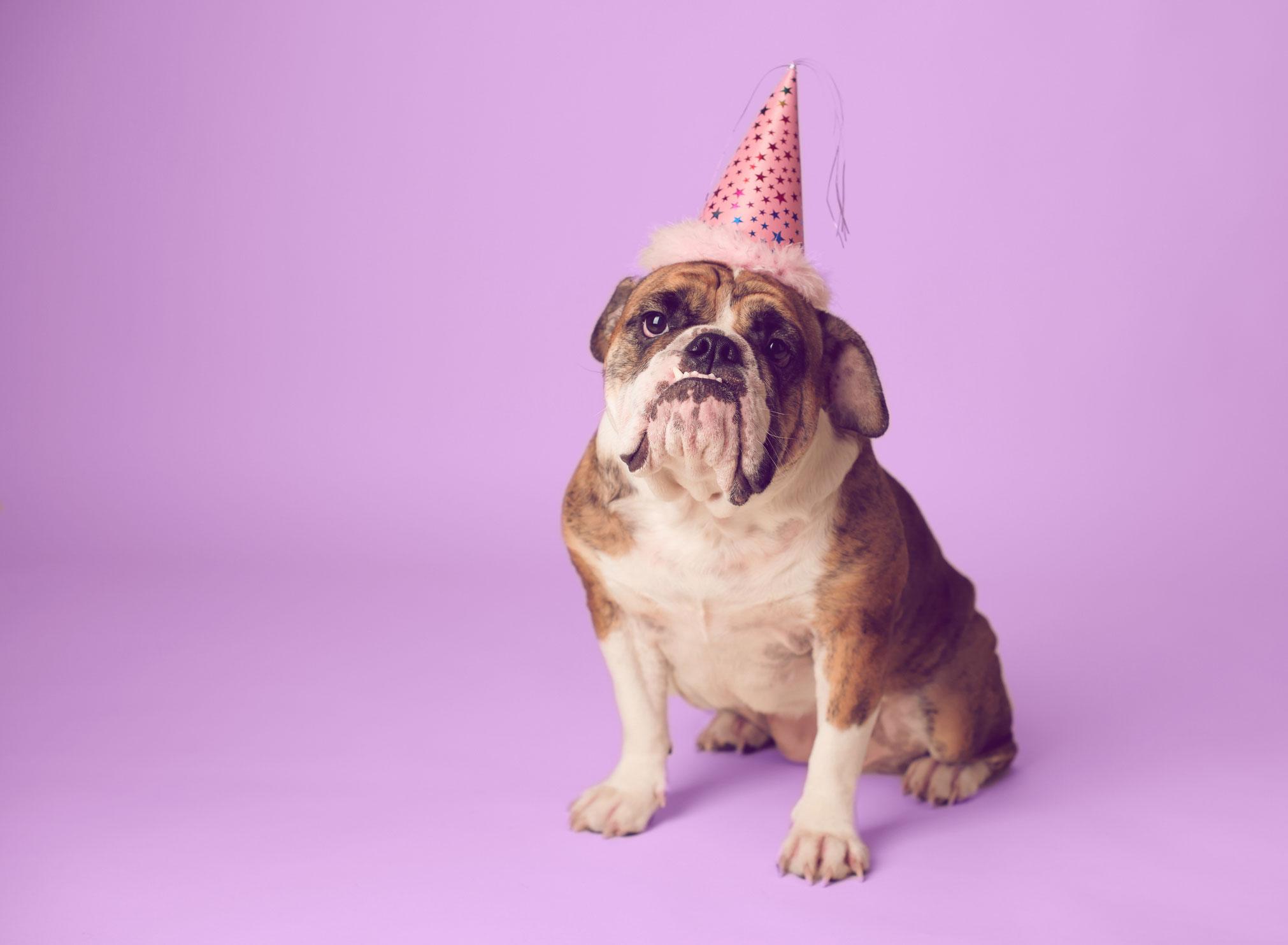 Hund an Silvester: 9 Tipps für einen entspannten Jahreswechsel