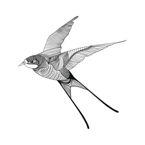 Tattoo vorlage schwalbe Vogel Bild: