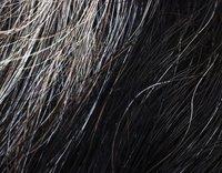 Graue Haare mit 30 sind genetisch bedingt