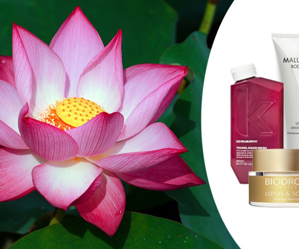 Beauty-Booster Lotusblume