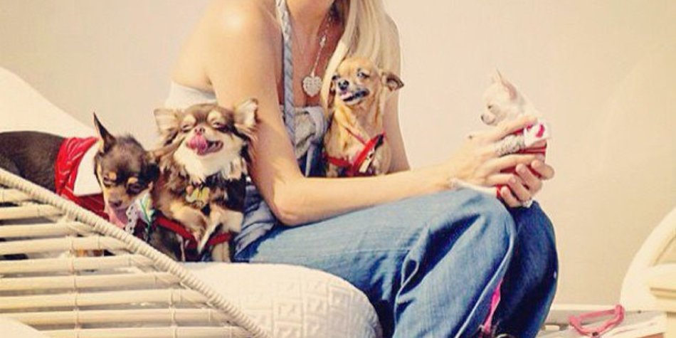 Paris Hilton hat jetzt drei Frettchen