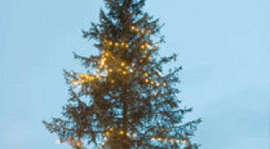 Der perfekte Baum