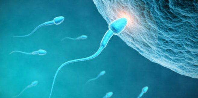 Spermium dringt in Eizelle ein