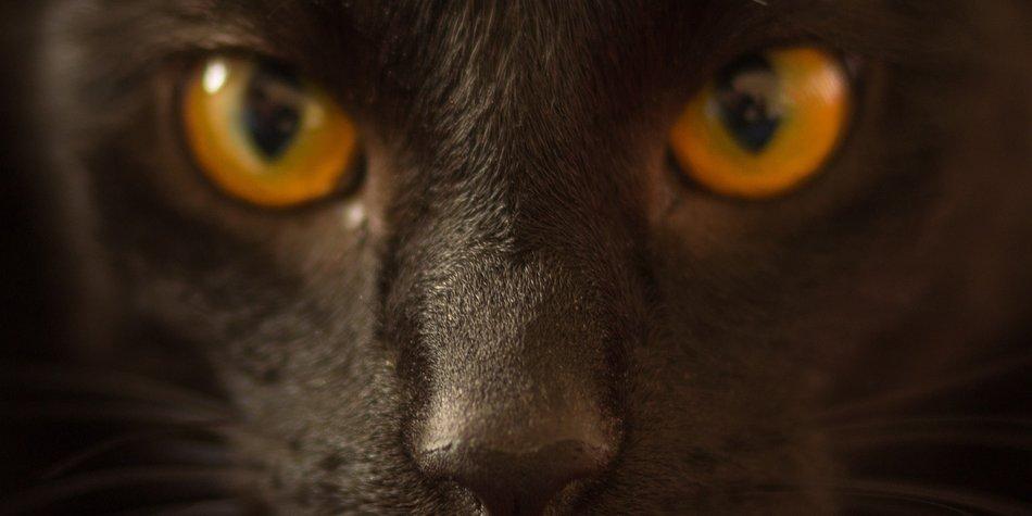 cat-882158_1920