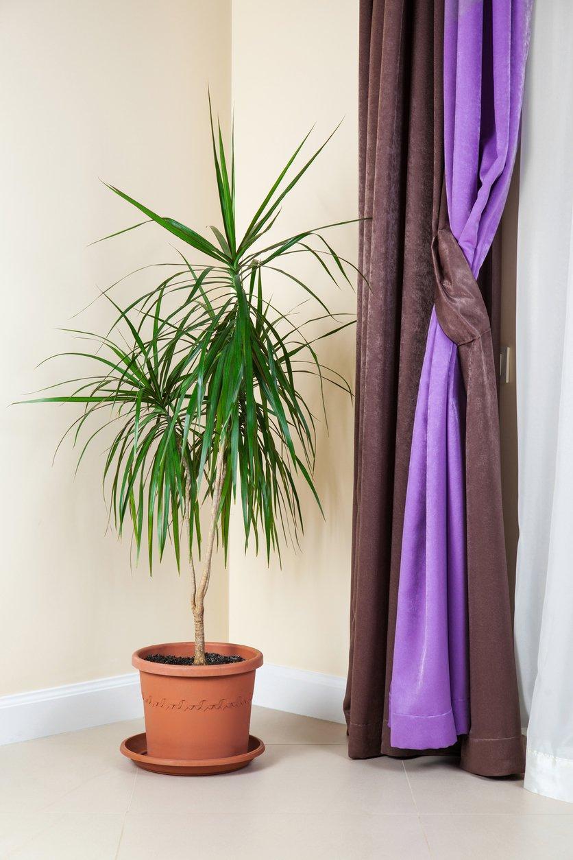 Zimmerpflanzen wenig Licht