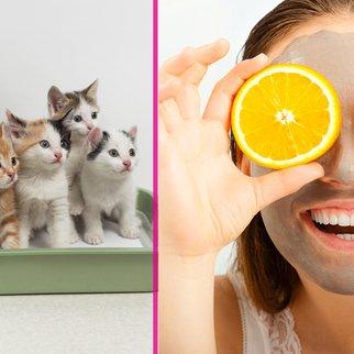 Katzenstreu als Gesichtsmaske?