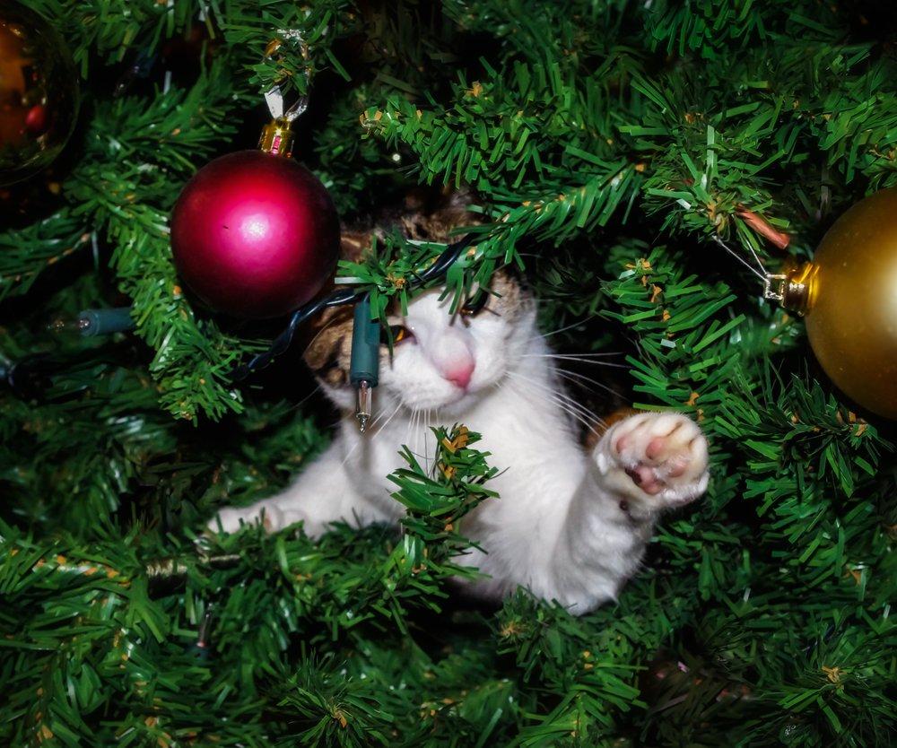 Katze im Weihnachtsbaum