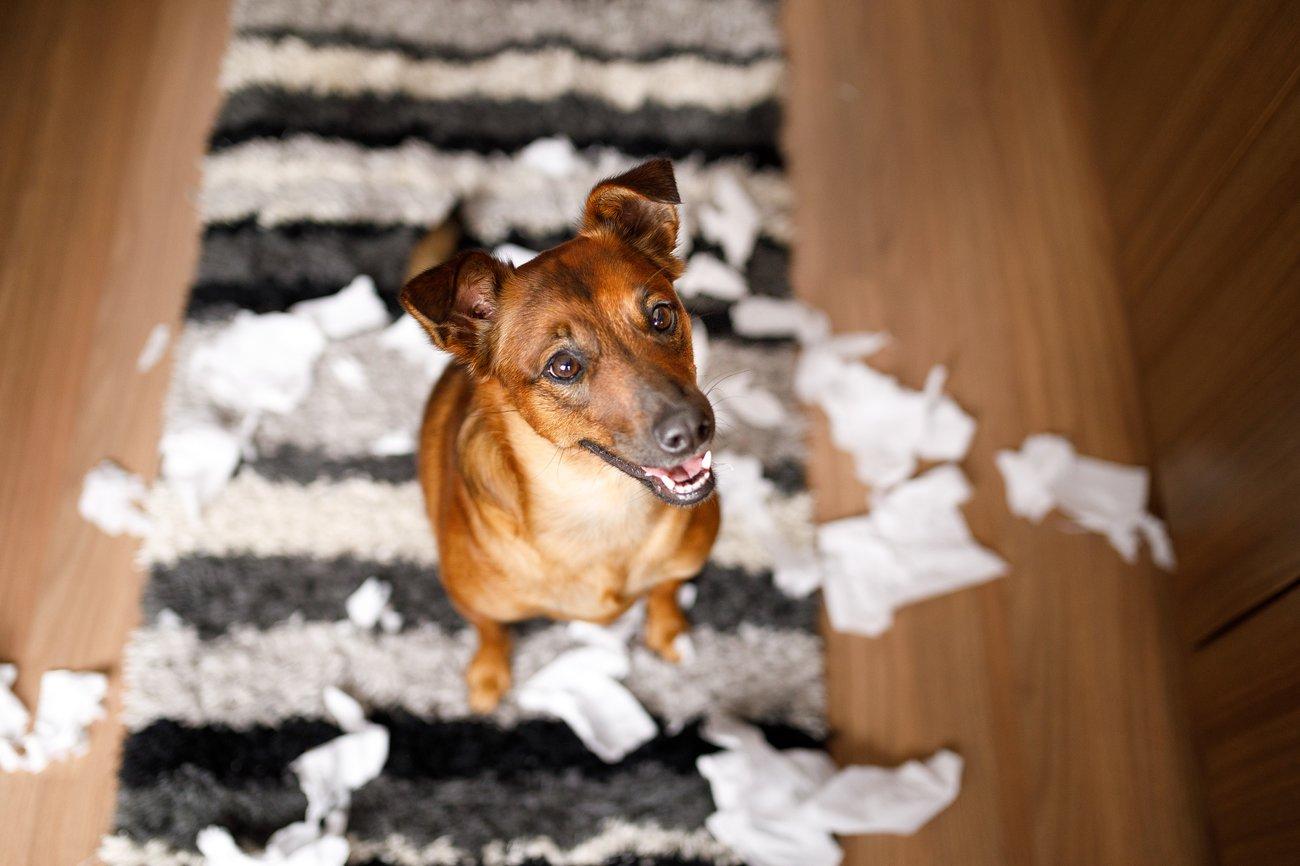 Hund glücklich