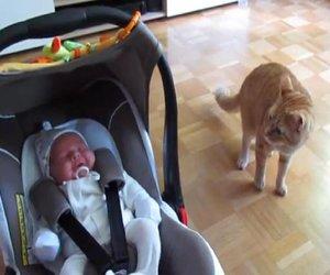 Süße Katze und Baby treffen das erste Mal aufeinander
