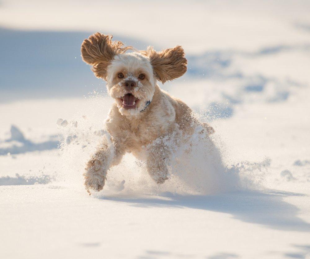 Hund spielt im Schnee