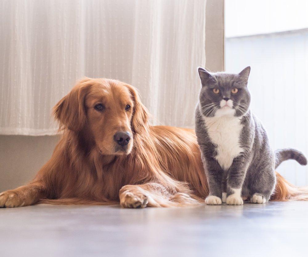 Hund, Katze, Maus? Menschen mit diesem Haustier gehen am häufigsten fremd
