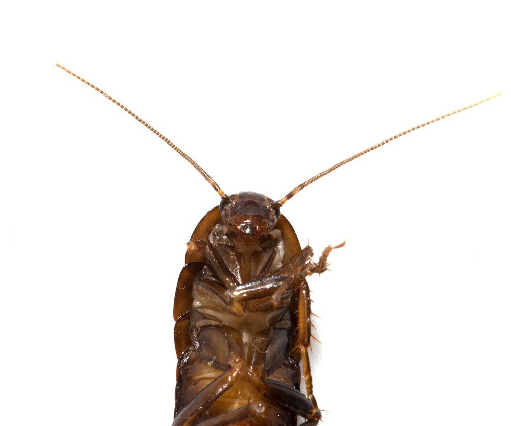 Der Körper einer Motte