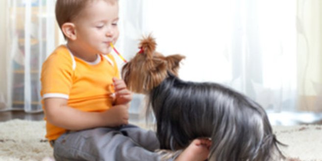 Junge spielt mit kleinem Hund