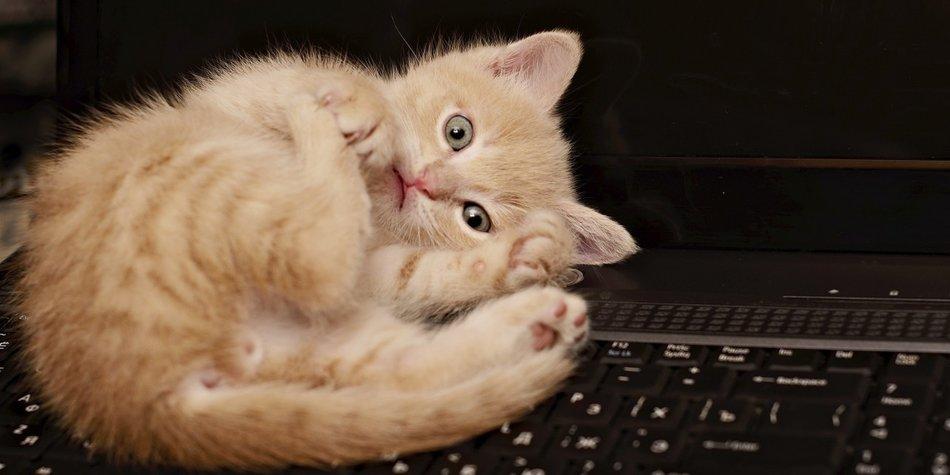 Katzenvideos