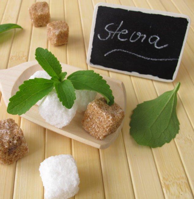 Die Steviapflanze ähnelt vom Aussehen der Minze