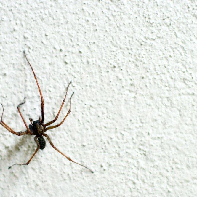 Spinne Wohnung