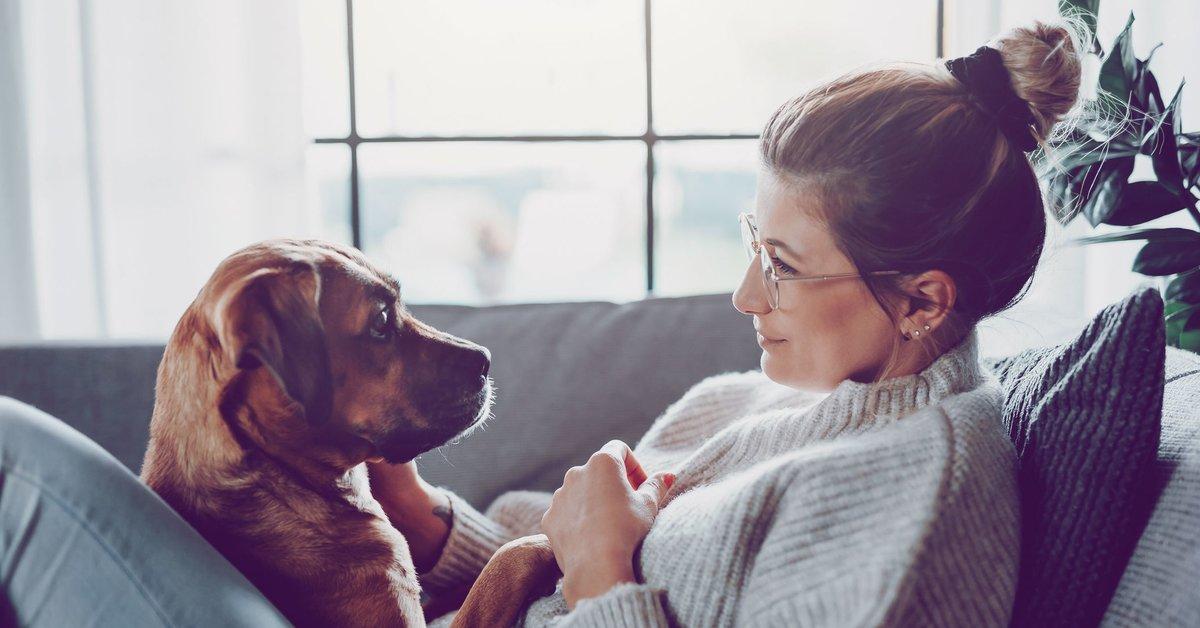 Laut Forschern: Diese Worte machen deinen Hund glücklich | desired.de