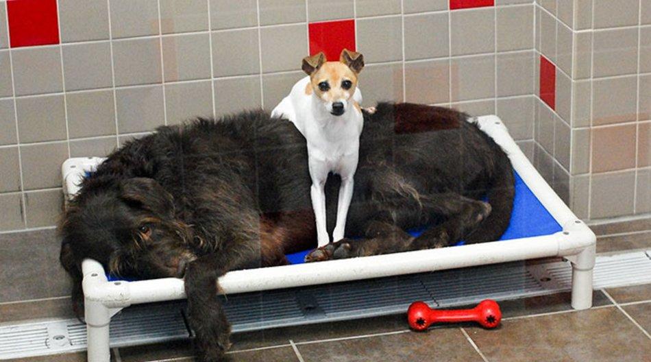 homeless-dogs-cuddling-2