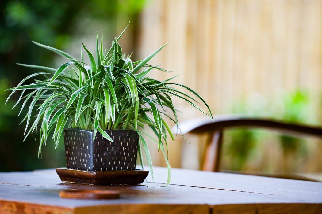7 Zimmerpflanzen Die Wenig Licht Brauchen Desiredde