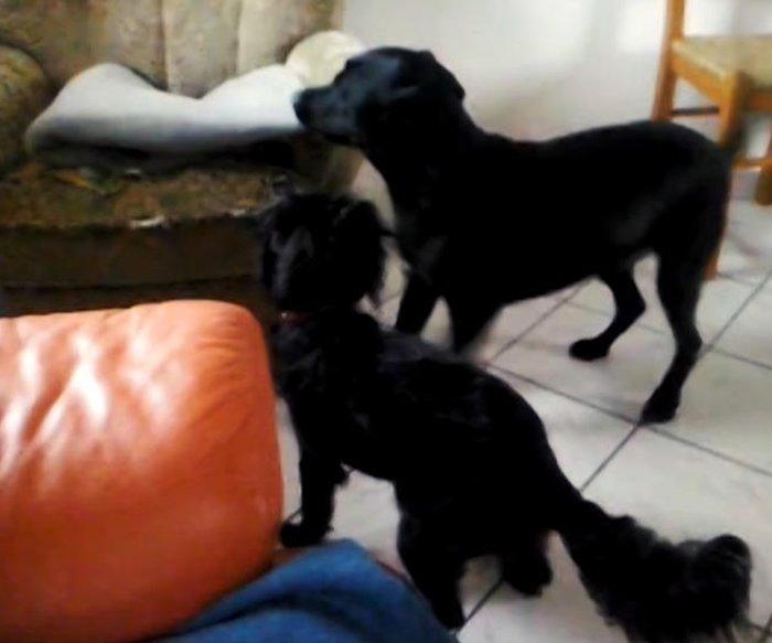 Hier tollt Lisa noch mit dem anderen Hund